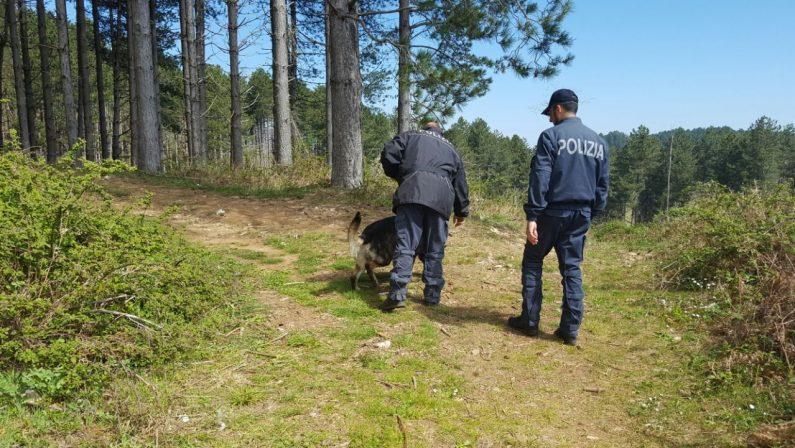 Uomo scomparso nel Cosentino, anche i cani molecolari per trovare elementi utili