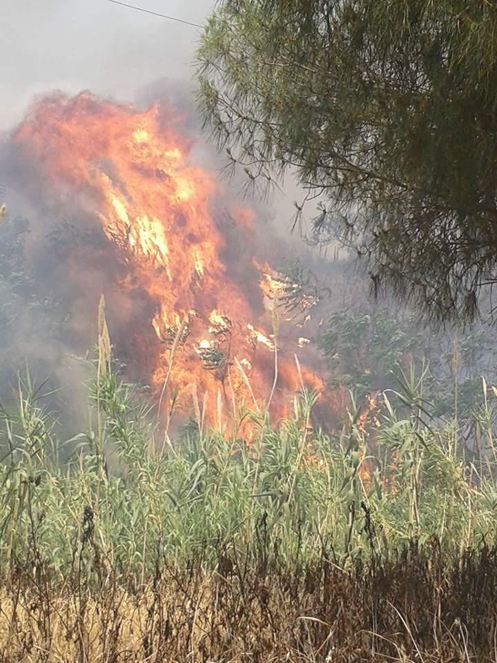 Giornata di incendi in tutte le zone della CalabriaRoghi minacciano case nel Cosentino e nel Reggino