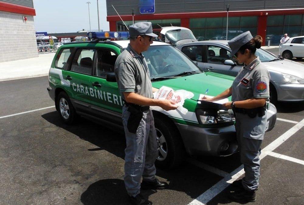 Cinque arresti in provincia di Reggio Calabria per taglio abusivo di alberi