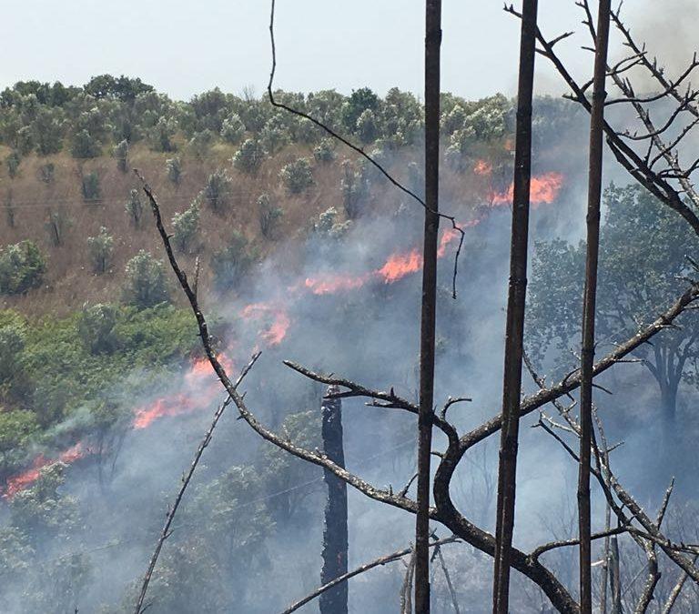 FOTO – Incendi nel Lametino, case minacciate  Un uomo tratto in salvo dai carabinieri