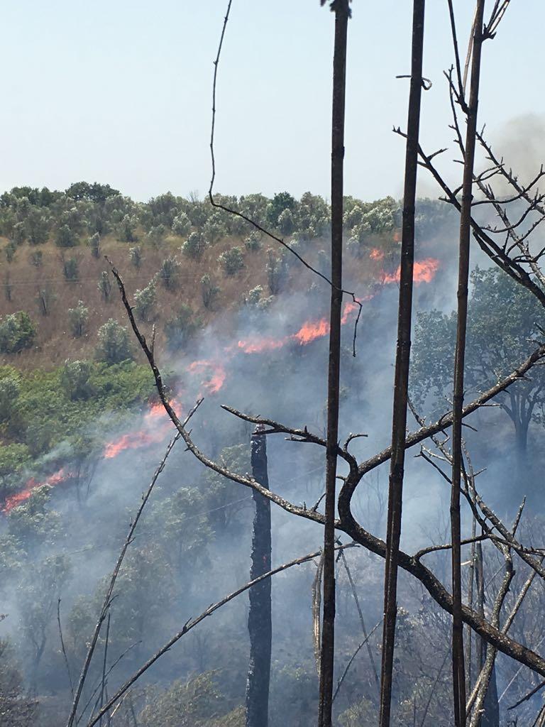 FOTO - Incendi nel Lametino, case minacciateUn uomo tratto in salvo dai carabinieri