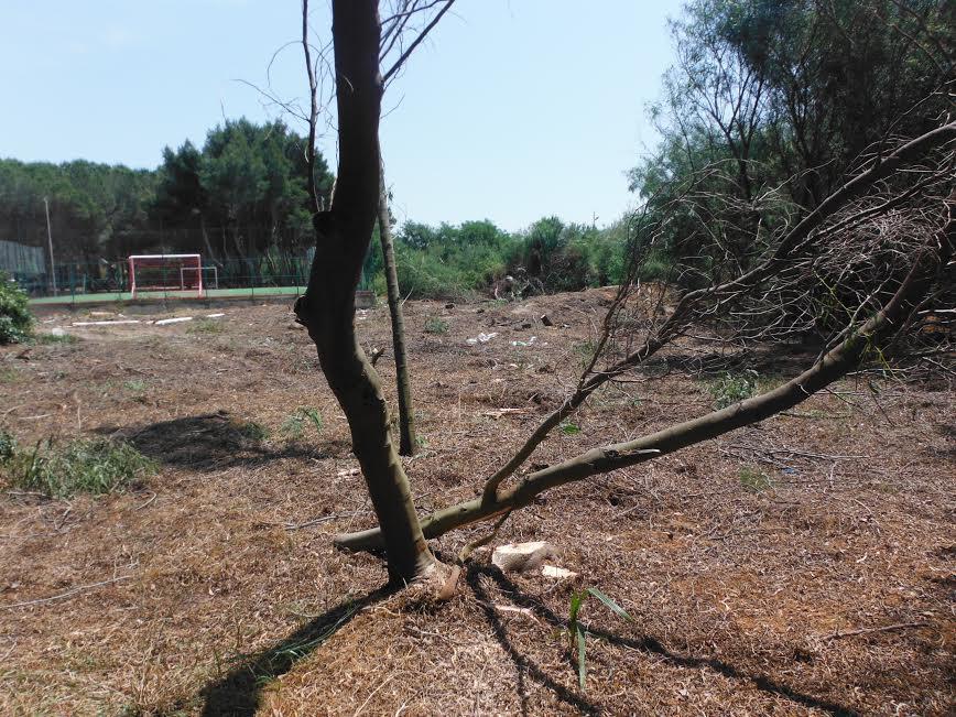 La zona dove sono stati abbattuti gli alberi