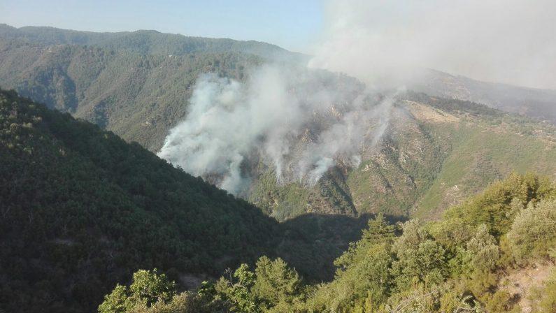 Calabria continua a bruciare è allarme nel territorioDue i morti, uno nel Cosentino e uno nel Vibonese