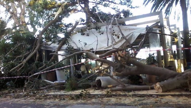 Cade albero e distrugge nota gelateria a ReggioMolti i danni sul lungomare, convocata la Giunta