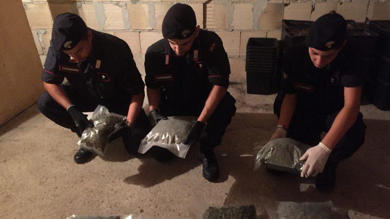 Maxi serra per marijuana in un locale di campagna, sequestro e arresto per un uomo del Crotonese