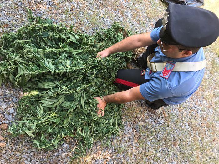 Gizzeria, scoperto un magazzino adibito a serra per la produzione di marijuana