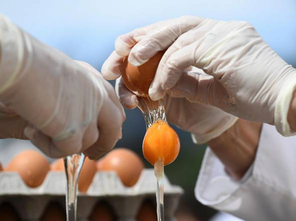 Uova contaminate, due casi in Campania