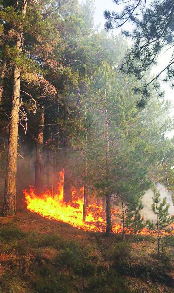 Incendiava i boschi della Sila con ordigni artigianaliArrestato un uomo originario di Cropalati nel Cosentino