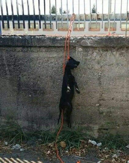 Cane trovato morto a Lamezia Terme, i primi esami sembrerebbero escludere l'ipotesi impiccagione