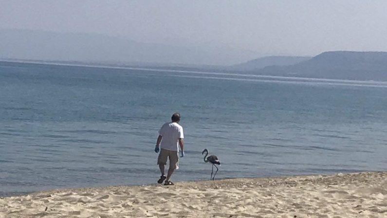 Un fenicottero sulla spiaggia di Vibo MarinaL'esemplare preso in cura da volontari del Wwf