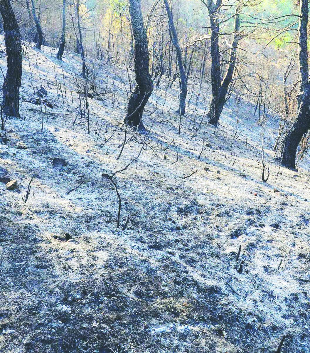 FOTO - Il paesaggio sfregiato, quello che resta dopo un'estate resa rovente dagli incendi