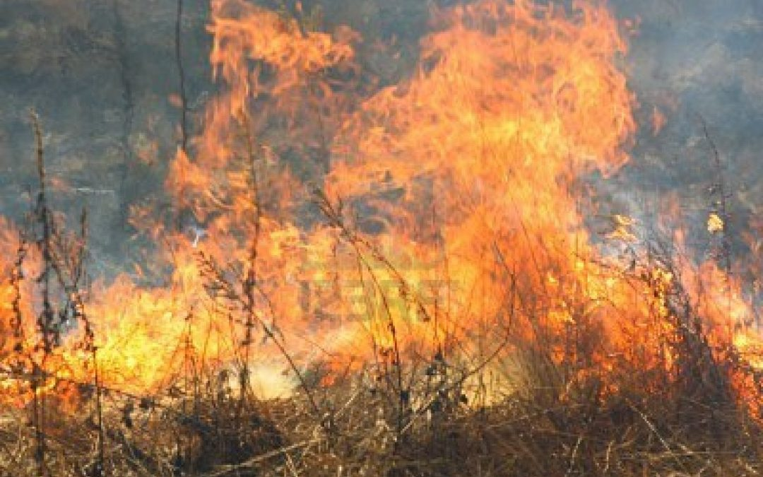 Appiccava un incendioin provincia di Reggio Calabria  Arrestato in flagranza dai carabinieri un 52enne