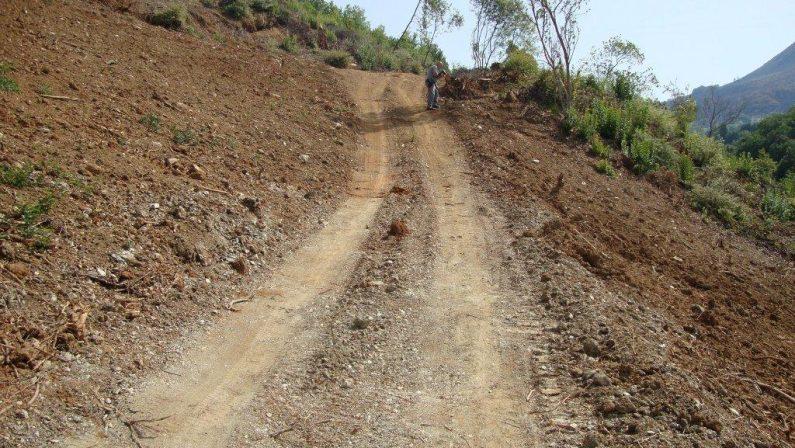 Realizza una strada in un'area sottoposta a vincoloTagliato un bosco, uomo denunciato nel Cosentino