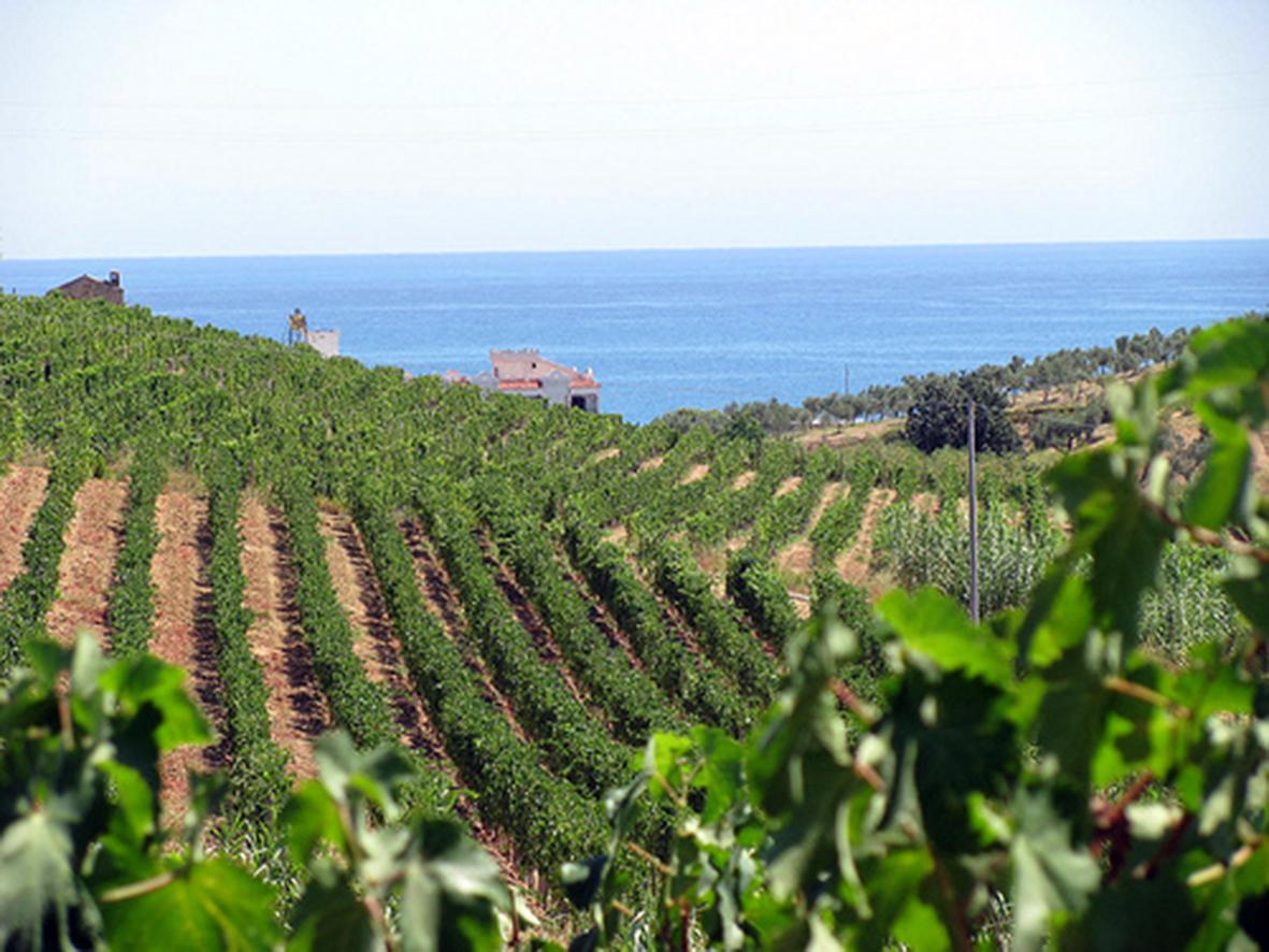 I sindaci delle città del vino si incontrano in CalabriaLe terre del Cirò ospiteranno la Convention d'Autunno