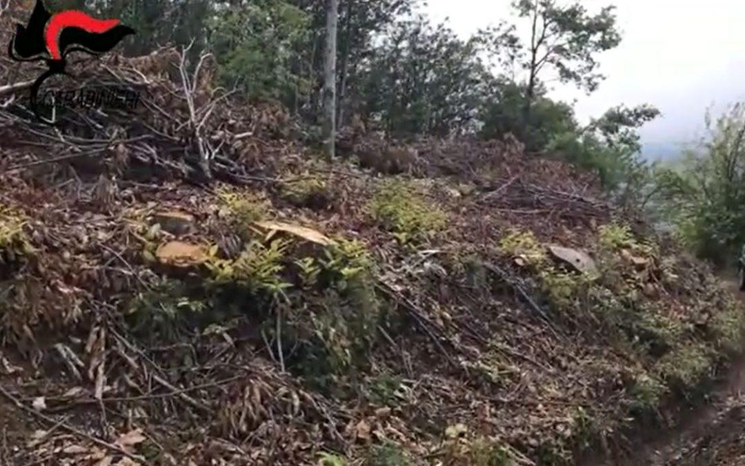 Scoperti quattro lavoratori in nero nel Vibonese  Sospesa l'attività di un'azienda boschiva di Fabrizia