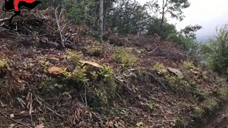 Distrutti 200 mila metri quadrati di bosco nel CosentinoTre denunce: tagliavano abusivamente castagni e querce