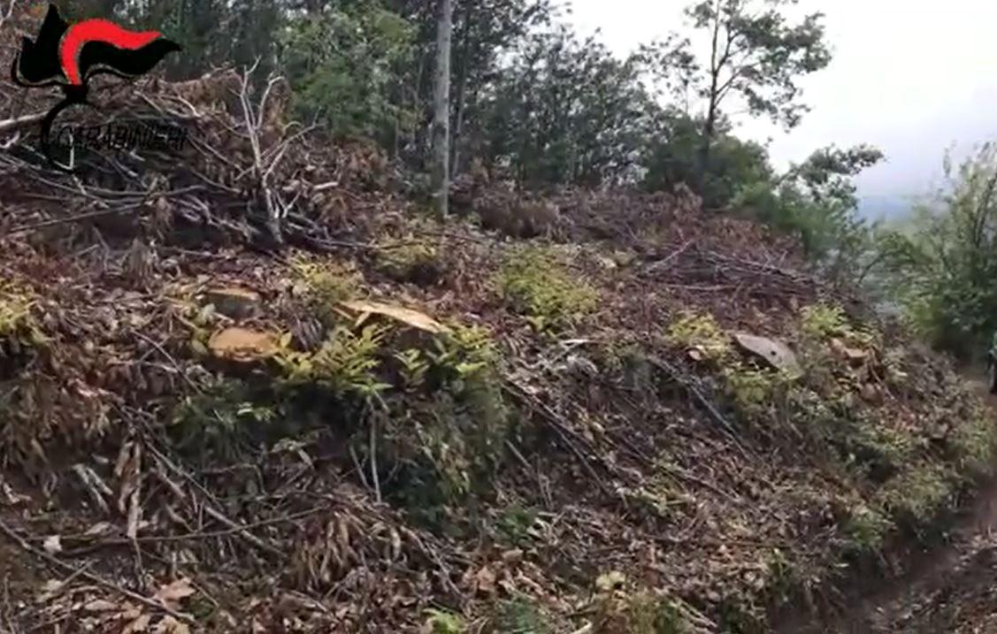 Scoperti quattro lavoratori in nero nel ViboneseSospesa l'attività di un'azienda boschiva di Fabrizia