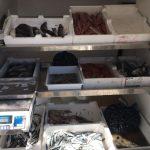 Pesce sequestrato.jpg