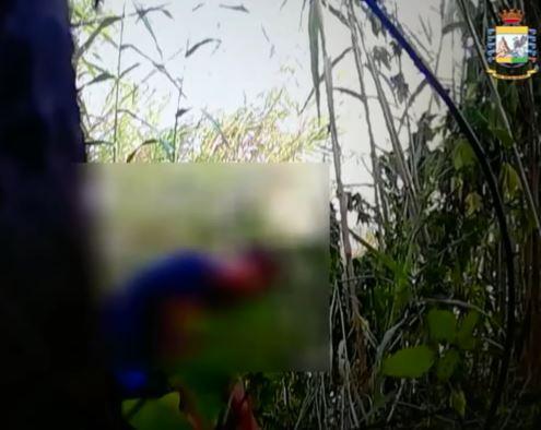VIDEO - Scoperta piantagione di canapa nel CosentinoResponsabile ripreso mentre curava la coltivazione