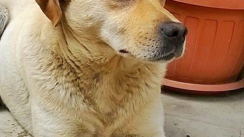 Cane ucciso a colpi d'arma da fuoco nel ViboneseEnnesimo atto di barbarie nei confronti di un animale