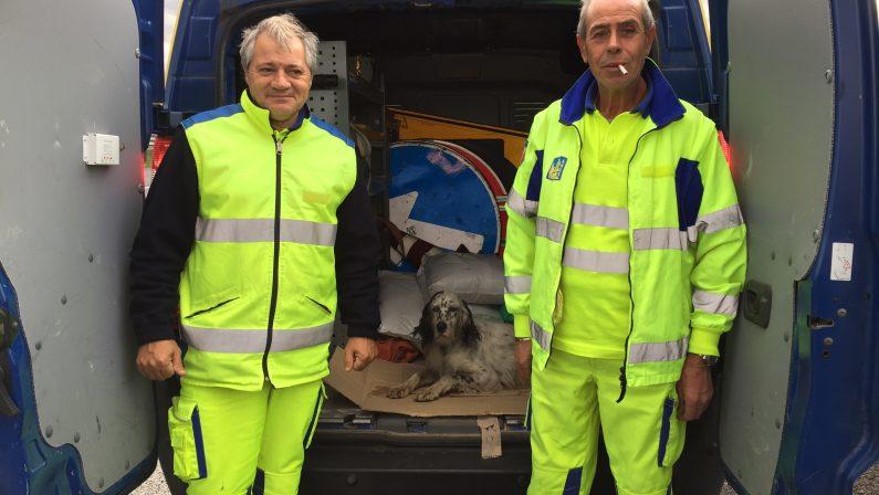 Setter ferito salvato lungo l'autostrada da due cantonieri dell'Anas