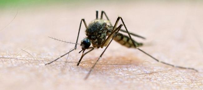 Allarme malaria, dopo i casi a Taranto la Regione Basilicata avvia i controlli