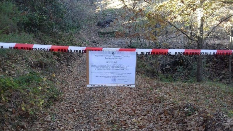 Muore mentre taglia alcuni alberi nel CosentinoAccertamenti hanno stabilito che è stata una caduta