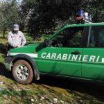 Carabinieri Forestali_0.jpg