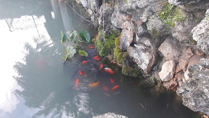 Avvelenata l'acqua del laghetto di Santa Maria a PolistenaAcqua nera e strage di pesci nello specchio lacustre