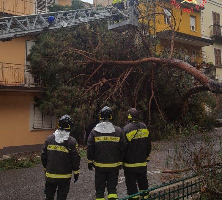 Albero crolla sulla facciata di una casa a Lamezia  Tanta paura per i residenti, avviate verifiche