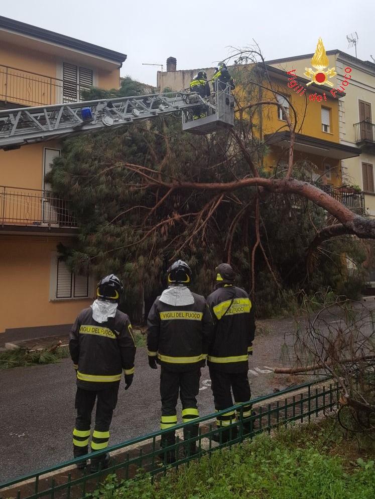 Albero crolla sulla facciata di una casa a LameziaTanta paura per i residenti, avviate verifiche