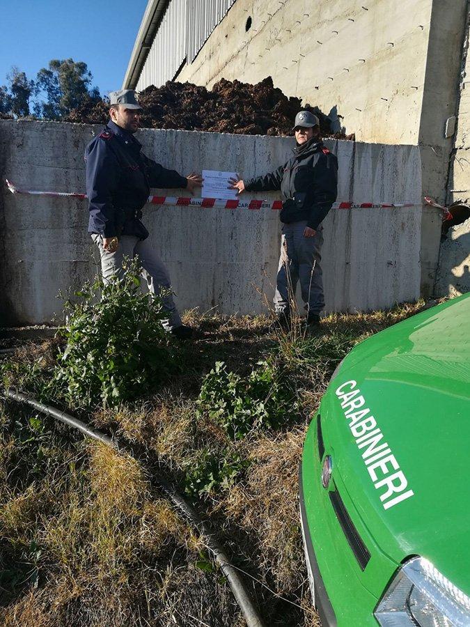 Irregolarità nello smaltimento dei letami, sequestrata concimaia e alcuni bovini nel Cosentino
