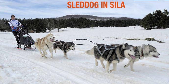 """Parco nazionale della Sila ospita """"Dogs on the snow"""" Manifestazione con gli splendidi cani da slitta"""