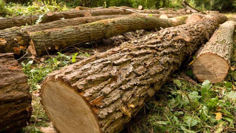 Un uomo schiacciato da un albero in provincia di CosenzaLa vittima stava tagliando la pianta che l'ha uccisa