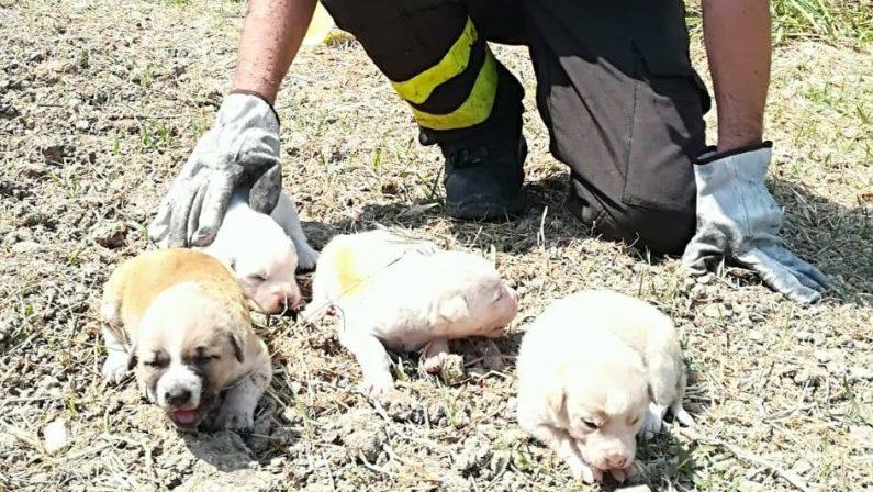 Salvano quattro cuccioli durante un incendioSoccorso nel Crotonese, i cani stanno bene