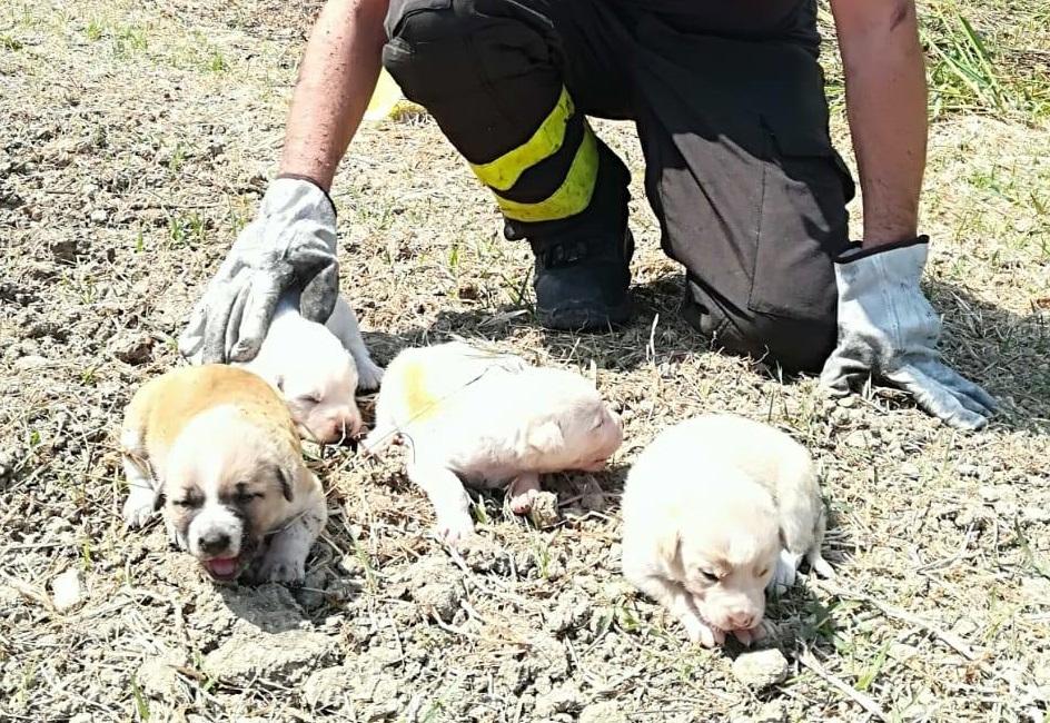 Salvano quattro cuccioli durante un incendio  Soccorso nel Crotonese, i cani stanno bene