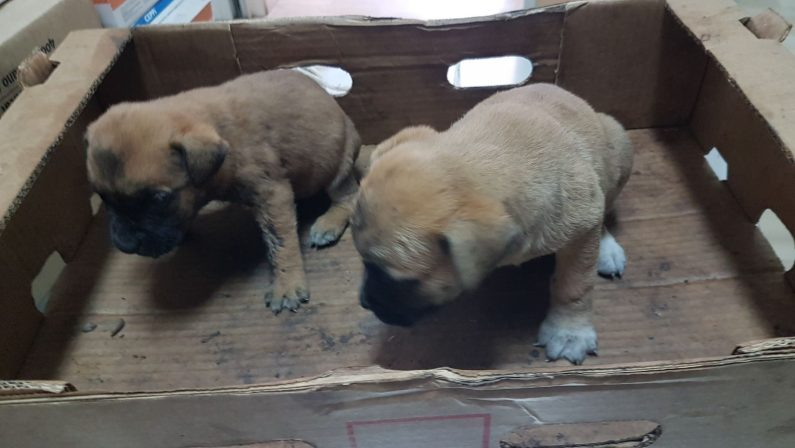 Due cuccioli abbandonati in strada nel ViboneseSalvati da un turista e dalla polizia stradale