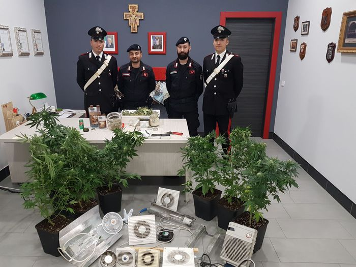 Coltivava marijuana nel sottotetto di casaCarabinieri sequestrano piante e dosi nel Cosentino