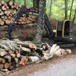 Taglio alberi vibo.jpg