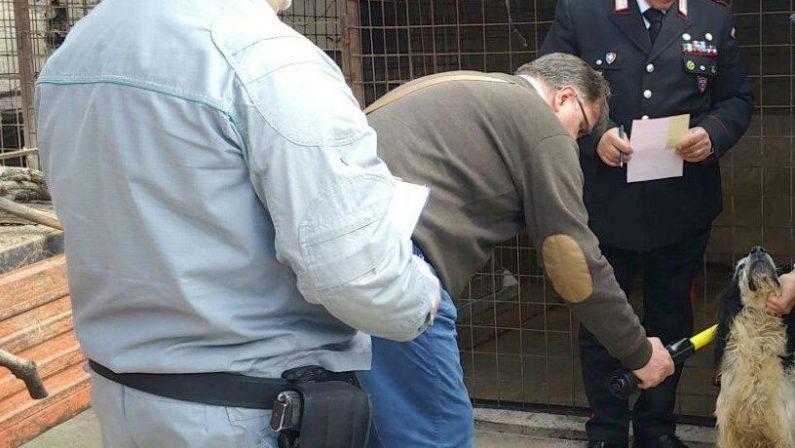 Animali maltrattati nel Cosentino, tre denunceCondizioni disumane in diverse strutture e canili