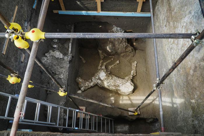Pompei: scoperta sagoma di cavallo tra gliscavi Civita
