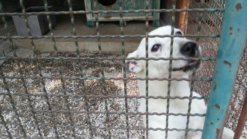 Animali maltrattati e denutriti, sequestrato un canile in provincia di Reggio Calabria: deferiti un imprenditore e un dirigente dell'Asp