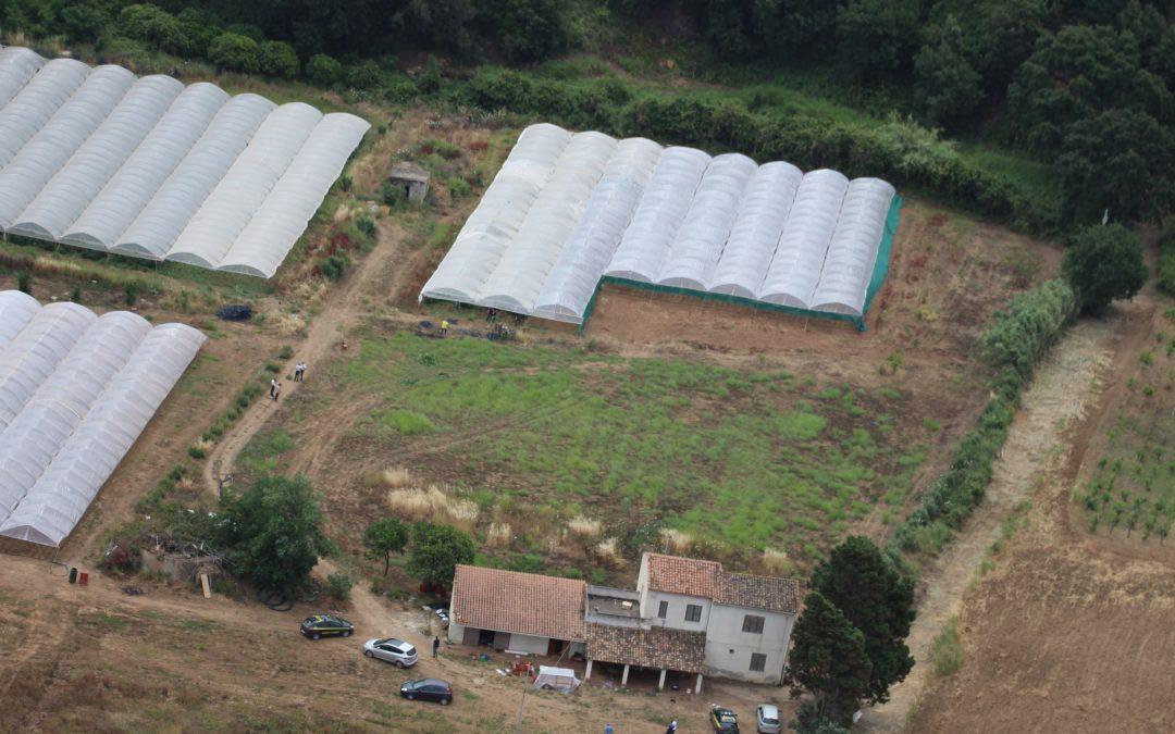Parte della piantagione individuata