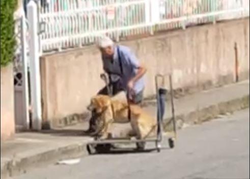 Cane malato a passeggio con imbracatura a ViboAzienda dona un carrellino per aiutare l'animale