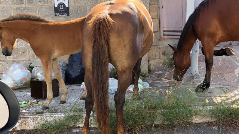 Cavalli da corsa mandati al macello con documenti falsi, calabrese denunciato in Emilia