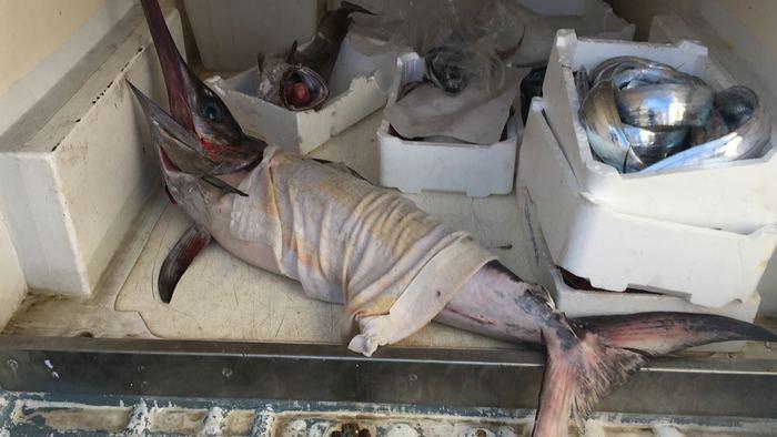 Oltre 90 chili di pesce pescato senza autorizzazione sequestrato a Palmi dalla Capitaneria