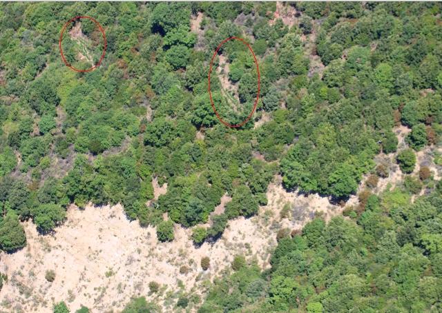 Altre tre piantagioni di canapa sequestrate nel RegginoIndividuate grazie ad un elicottero: valore di 7 milioni