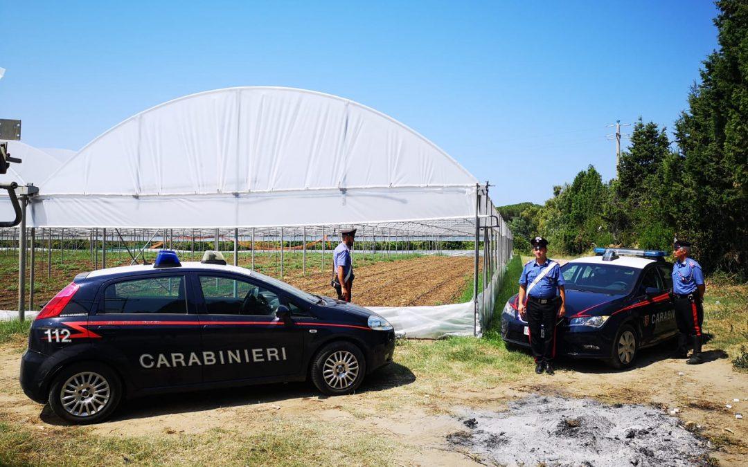 FOTO – Scoperte diverse serre colme di cannabis  Operazione dei carabinieri nel Lametino