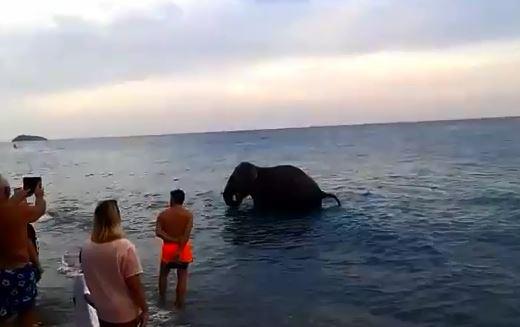 VIDEO – Troppo caldo e l'elefante decide di fare un bagno in mare tra i turisti del Cosentino