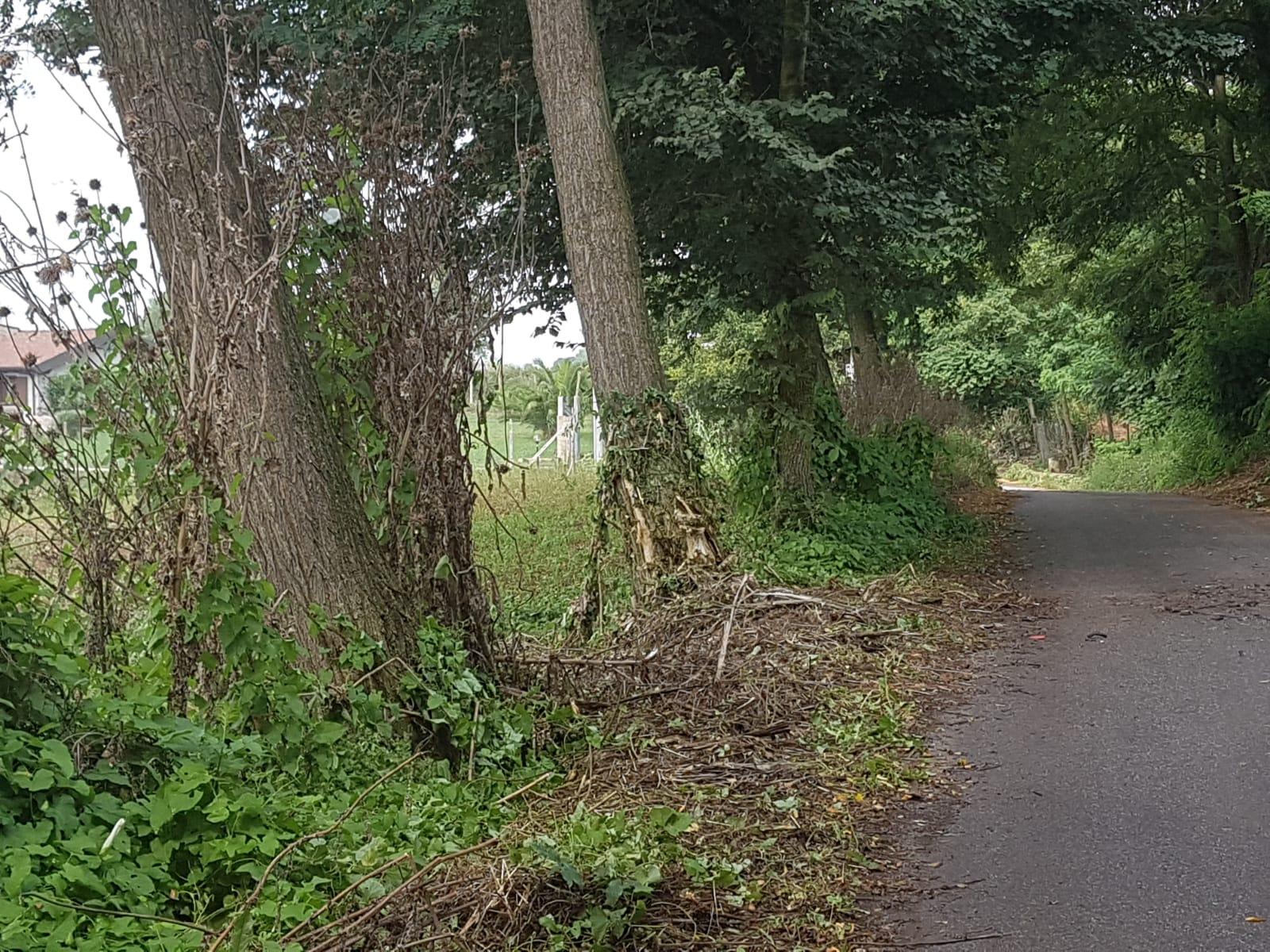Incidente nel Vibonese, auto finisce contro un alberoIn gravi condizioni due giovani: prognosi riservata